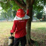 Jasa Pembasmi Tawon di Medan Sumatera Utara
