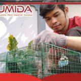 Jasa Pembasmi Tikus di Medan Sumatera Utara