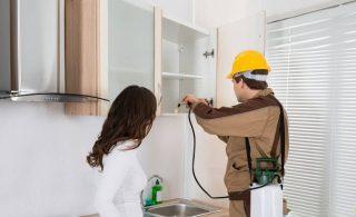 Cara Mencegah Munculnya Rayap di Rumah